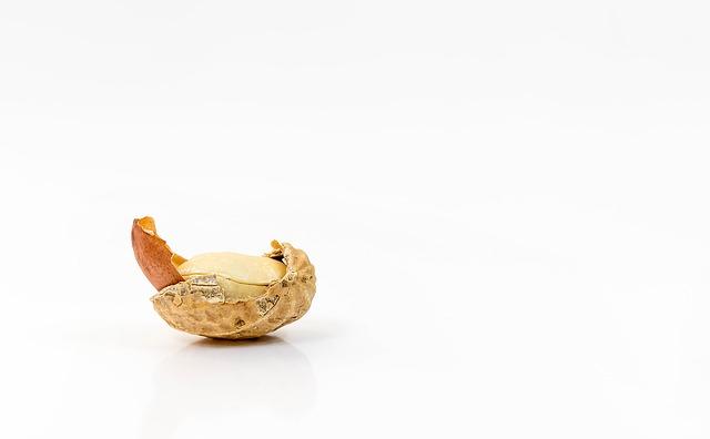 Einsame Erdnuss für die Weiterbildung in Essen